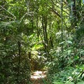 Foret_tropicale__11_