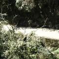 Most_dangerous_road__43_