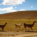 Altiplano_day_1__11_
