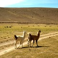 Altiplano_day_1__12_