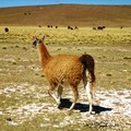 Altiplano_day_1__14_