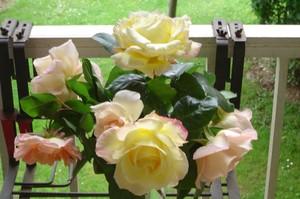 des_roses_du_raincy