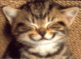 sourire_chat