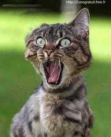 Résultats de recherche d'images pour «chat nono sourcil»
