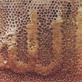 miracles d'abeilles
