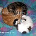 Doddy, Tigrou et Pépette