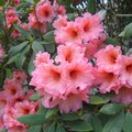 fleurs_sur_le_trajet__1_