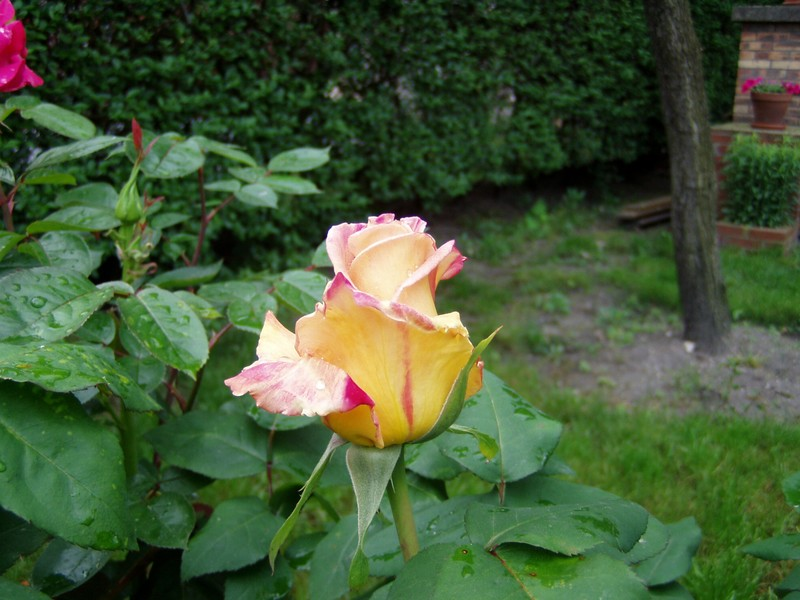 fleurs_18_mai_06_009