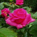 fleurs_18_mai_06_011