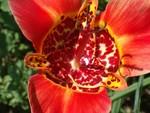 jardinjuillet_macro_011
