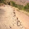 Etat de la route >Morondava