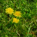 fleurs_7