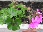 plants_kiki2