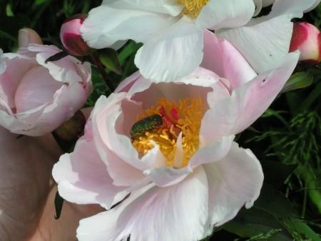blog_gallery_bugs_1
