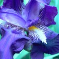 Le jardin ne Mo' ne manque pas de couleurs tout comme elle