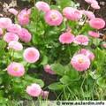 Fleurs de Pâques emperlées de rosée