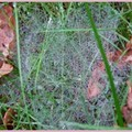 Toile d'Arachnée irisée
