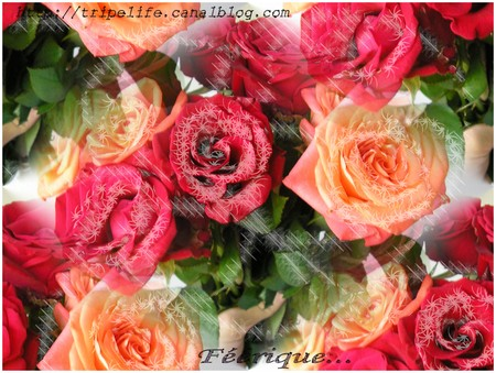 roses21