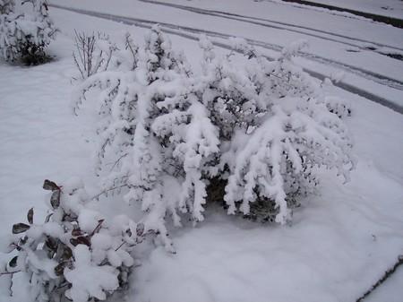 bush_under_snow