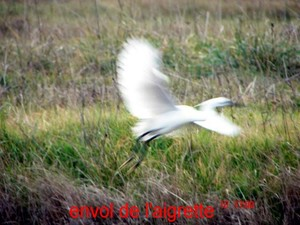 vol_aigrette