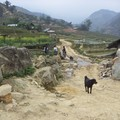 lost dog in SAPA...