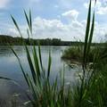 promenade au bord du lac du Der (51 & 52)