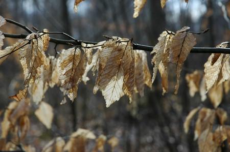 feuilles_jp