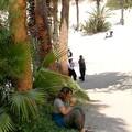 pause au pied des palmiers