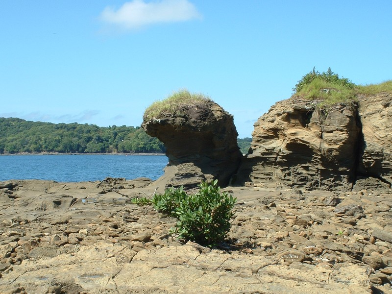 Un arbuste qui pousse dans les rochers