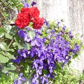 il y a aussi des fleurs