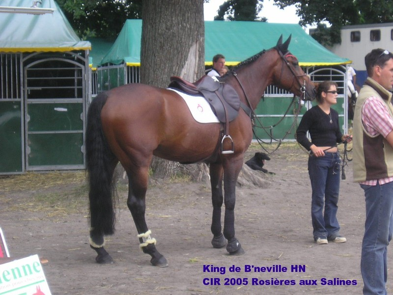 2006 Salammbo d'Ysabel (photos du 17 mai) King_de_Bneville